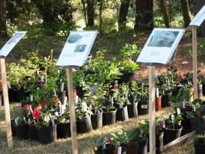 Weymouth Plant Sale @ Weymouth Center | Southern Pines | North Carolina | United States